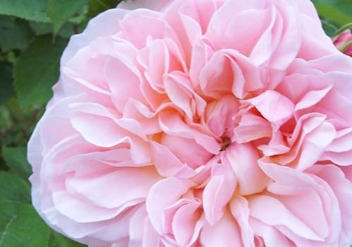 Rosengärten